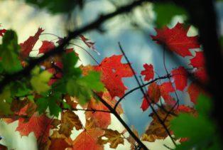 MILAK Park Herbst 2013 020 314x211 - Herbstzauber im MILAK Park
