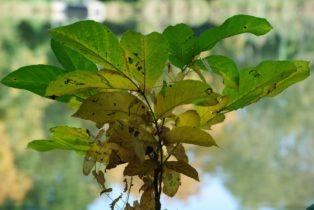 MILAK Park Herbst 2013 021 314x210 - Herbstzauber im MILAK Park