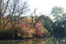 MILAK Park Herbst 2013 022
