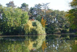 MILAK Park Herbst 2013 023 315x211 - Herbstzauber im MILAK Park