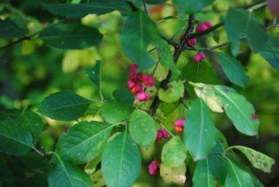 MILAK Park Herbst 2013 024 314x211 - Herbstzauber im MILAK Park