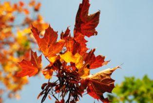 MILAK Park Herbst 2013 025 314x211 - Herbstzauber im MILAK Park