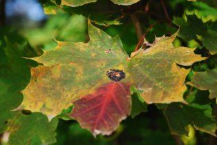 MILAK Park Herbst 2013 026 314x210 - Herbstzauber im MILAK Park