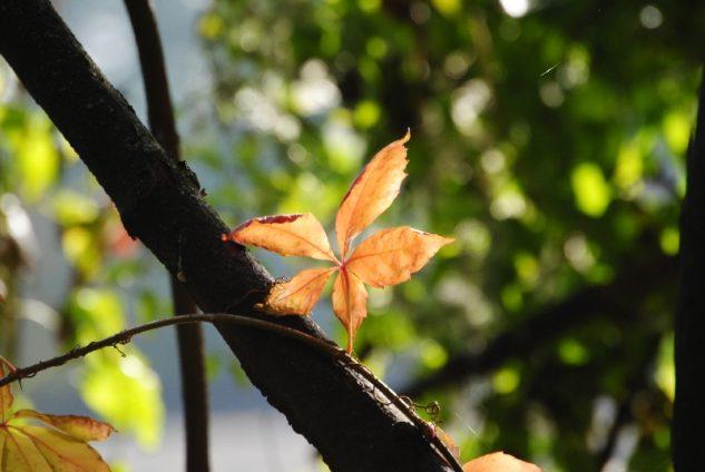 MILAK Park Herbst 2013 028 633x424 - Herbstzauber im MILAK Park