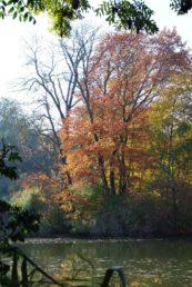 MILAK Park Herbst 2013 030 173x258 - Herbstzauber im MILAK Park