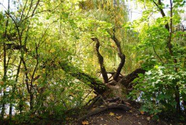 MILAK Park Herbst 2013 031 385x258 - Herbstzauber im MILAK Park