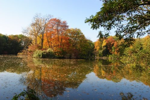 MILAK Park Herbst 2013 034 498x334 - Herbstzauber im MILAK Park
