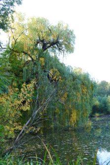 MILAK Park Herbst 2013 037 223x333 - Herbstzauber im MILAK Park