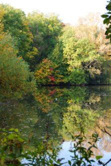 MILAK Park Herbst 2013 039 223x333 - Herbstzauber im MILAK Park