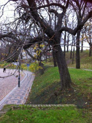 Prag Vyserad 2013 029 315x421 - Prag: zu Besuch bei einer Königin