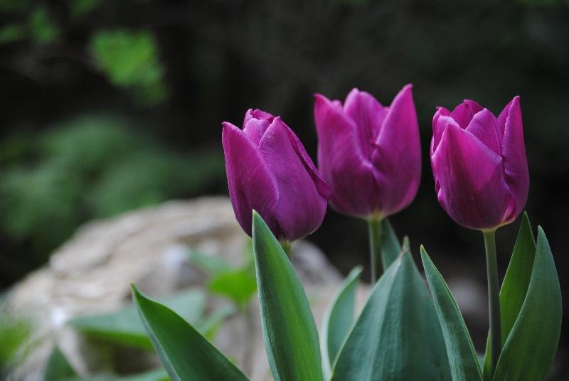 AprilMai 010 - Earth Day: Liebe Mutter Erde ...