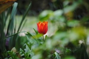 AprilMai 011 300x201 - Der April: Launig, lustig, knospend wandelnd