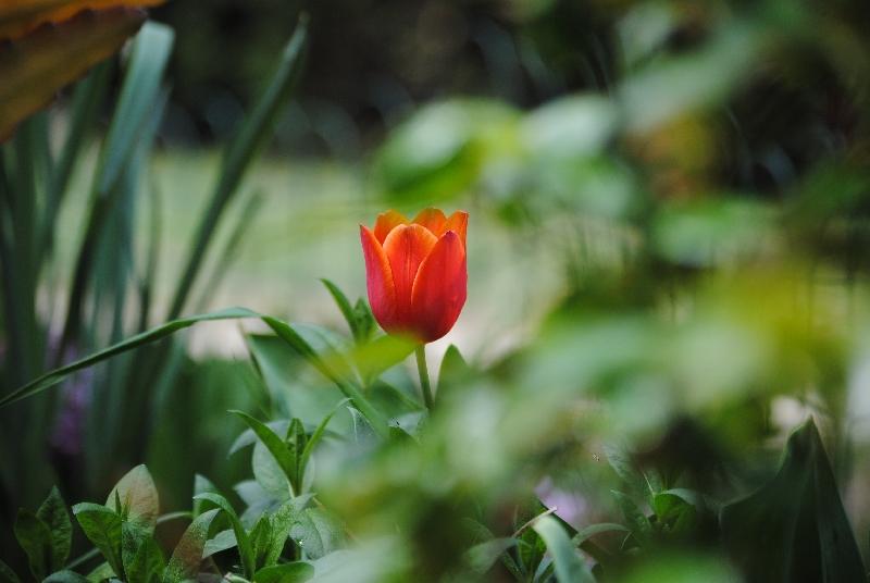 AprilMai 011 - Der März: Ein fruchtbarer und kriegerischer Lenz