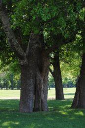 Laxenburg 110515 005 173x258 - Parkzauber im Laxenburger Schlosspark: Bäume, Wasser, Stein und Wiesen