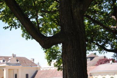 Laxenburg 110515 010 385x258 - Parkzauber im Laxenburger Schlosspark: Bäume, Wasser, Stein und Wiesen