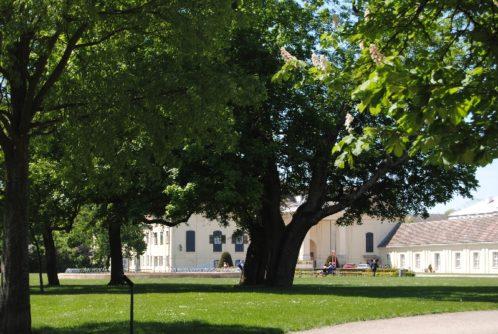 Laxenburg 110515 011 498x334 - Parkzauber im Laxenburger Schlosspark: Bäume, Wasser, Stein und Wiesen