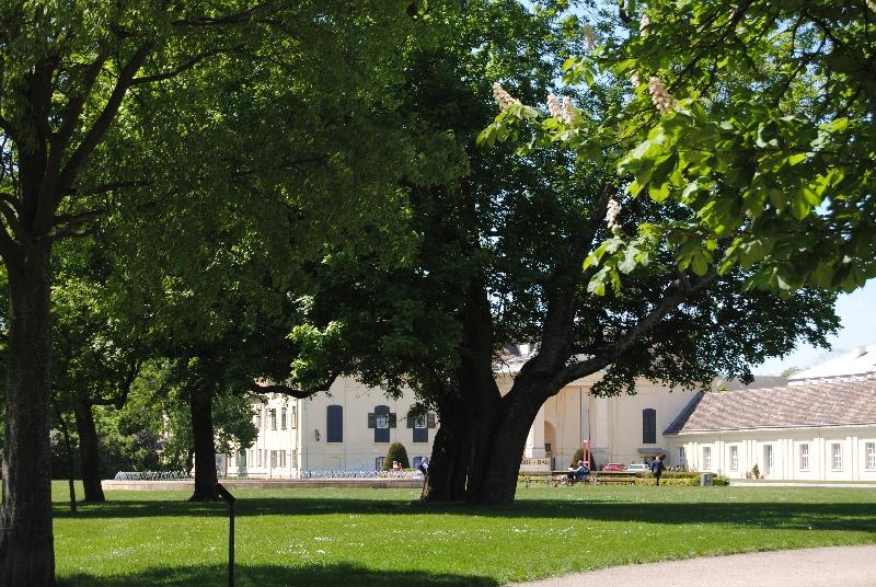 Laxenburg 110515 011 - Parkzauber im Laxenburger Schlosspark: Bäume, Wasser, Stein und Wiesen