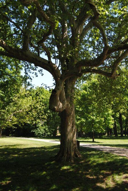 Laxenburg 110515 015 449x671 - Parkzauber im Laxenburger Schlosspark: Bäume, Wasser, Stein und Wiesen
