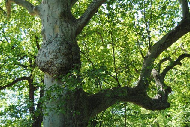 Laxenburg 110515 024 633x424 - Parkzauber im Laxenburger Schlosspark: Bäume, Wasser, Stein und Wiesen