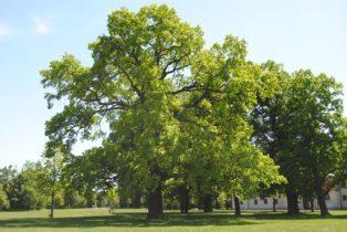 Laxenburg 110515 025 314x210 - Parkzauber im Laxenburger Schlosspark: Bäume, Wasser, Stein und Wiesen