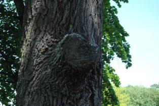 Laxenburg 110515 026 314x210 - Parkzauber im Laxenburger Schlosspark: Bäume, Wasser, Stein und Wiesen