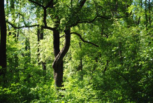 Laxenburg 110515 035 497x333 - Parkzauber im Laxenburger Schlosspark: Bäume, Wasser, Stein und Wiesen