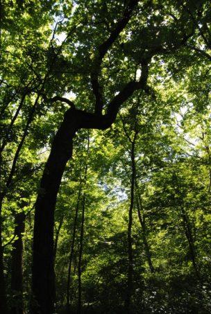 Laxenburg 110515 037 304x453 - Parkzauber im Laxenburger Schlosspark: Bäume, Wasser, Stein und Wiesen
