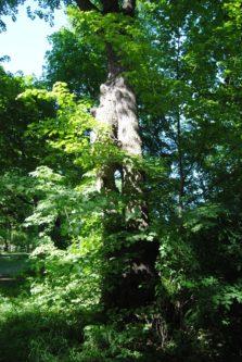 Laxenburg 110515 045 223x333 - Parkzauber im Laxenburger Schlosspark: Bäume, Wasser, Stein und Wiesen