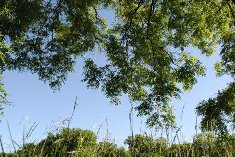 Laxenburg 110515 050 474x317 - Parkzauber im Laxenburger Schlosspark: Bäume, Wasser, Stein und Wiesen