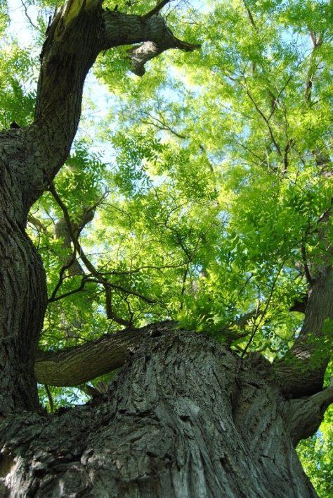 Laxenburg 110515 053 474x707 - Parkzauber im Laxenburger Schlosspark: Bäume, Wasser, Stein und Wiesen