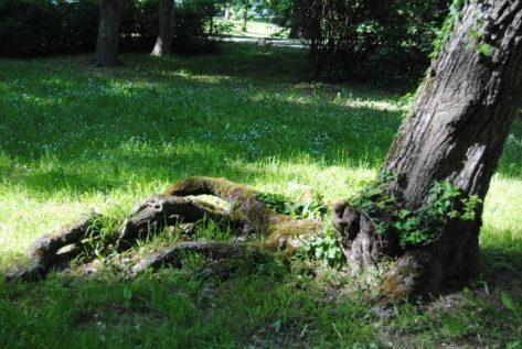 Laxenburg 110515 056 473x317 - Parkzauber im Laxenburger Schlosspark: Bäume, Wasser, Stein und Wiesen