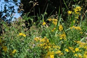 sommerwiese 300x201 - Der Juli: Heuert, bärig und sehr heiss