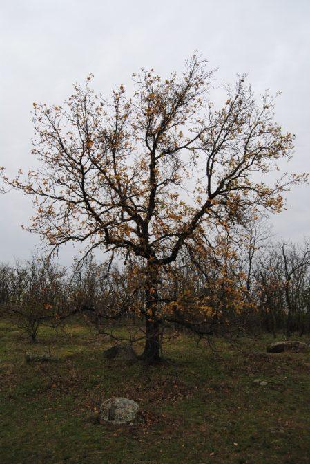 Fehhaube Nov15 012 449x671 - Die wundersame Fehhaube und die magischen Kogelsteine