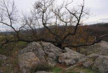 Fehhaube Nov15 029