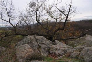 Fehhaube Nov15 029 314x211 - Die wundersame Fehhaube und die magischen Kogelsteine