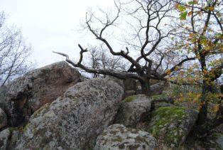 Fehhaube Nov15 054 314x211 - Die wundersame Fehhaube und die magischen Kogelsteine