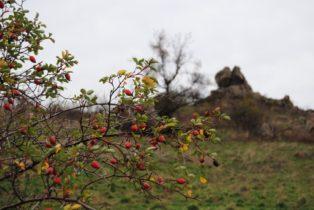Kogelsteine Nov15 008 314x210 - Die wundersame Fehhaube und die magischen Kogelsteine