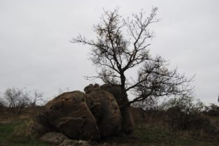 Kogelsteine Nov15 009 314x210 - Die wundersame Fehhaube und die magischen Kogelsteine