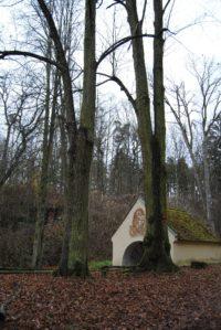 Bruendl Graslhoehle Nov15 022