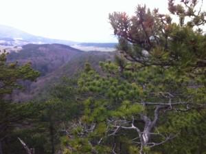 FoehrenToepferwiese 300x224 - Diplodia Pinea: Das große Sterben der Föhrenwälder