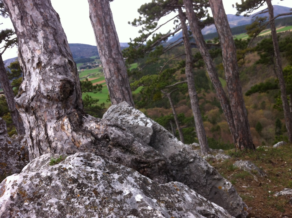DreistettenBrandstattjpg - Der neolithische Steinbruch im Maurer Wald