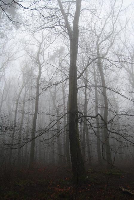 MaurerWald Dez15 007 449x671 - Der neolithische Steinbruch im Maurer Wald