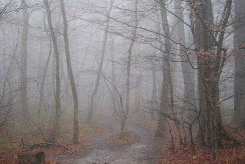 MaurerWald Dez15 009 498x334 - Der neolithische Steinbruch im Maurer Wald