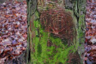 MaurerWald Dez15 011 314x210 - Der neolithische Steinbruch im Maurer Wald