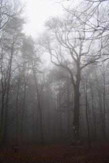 MaurerWald Dez15 022 223x333 - Der neolithische Steinbruch im Maurer Wald