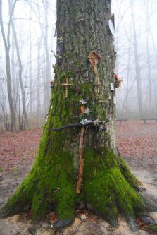 MaurerWald Dez15 028 223x333 - Der neolithische Steinbruch im Maurer Wald