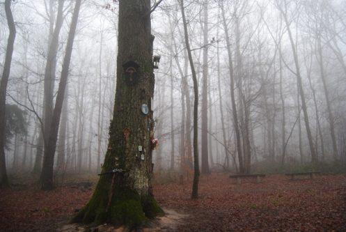 MaurerWald Dez15 031 497x333 - Der neolithische Steinbruch im Maurer Wald
