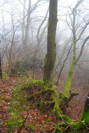 MaurerWald Dez15 034 293x438 - Der neolithische Steinbruch im Maurer Wald