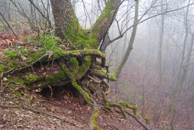 MaurerWald Dez15 036 654x438 - Der neolithische Steinbruch im Maurer Wald