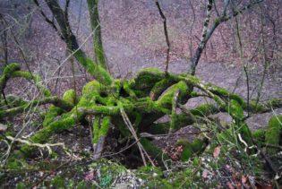 MaurerWald Dez15 041 315x211 - Der neolithische Steinbruch im Maurer Wald